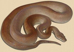 Children S Python Snake Ranch