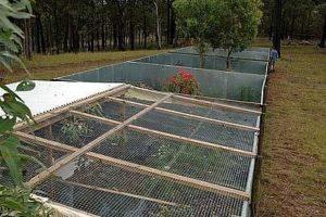 bluetongue breeding facility at Snake Ranch